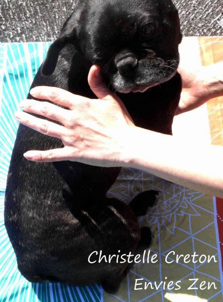 Christelle creton magnetisme animaux3